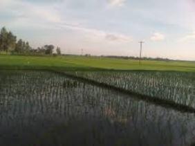 dhaan2